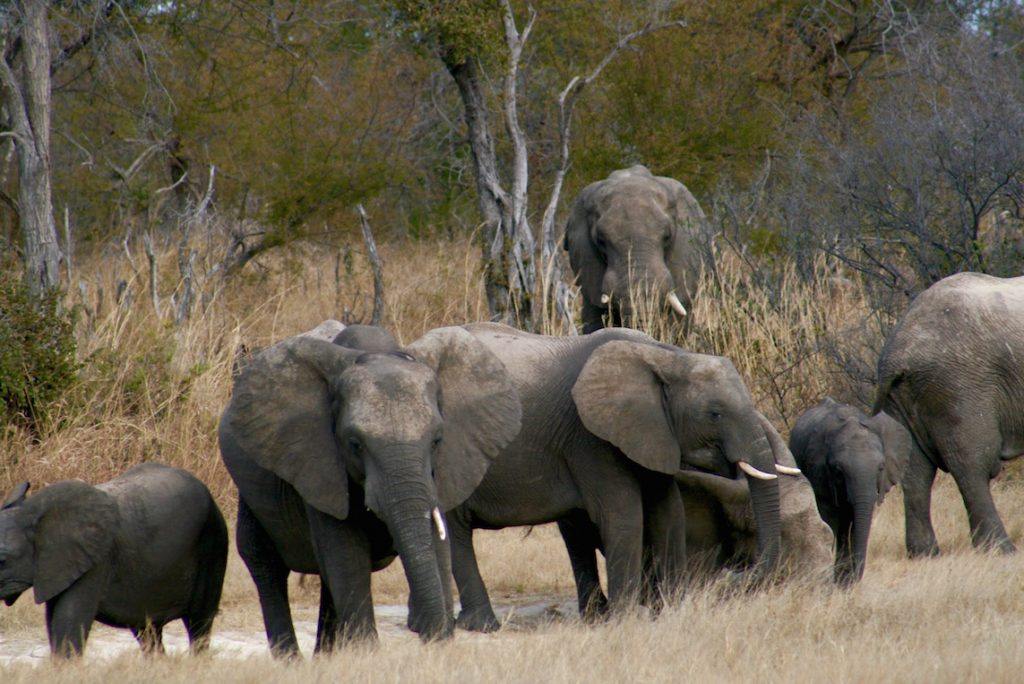 www.drsazini.com elephants
